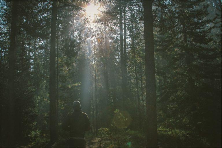 Cannabis-User beim Joggen im Wald nach dem Konsum einer aktivierenden Hanfsorte