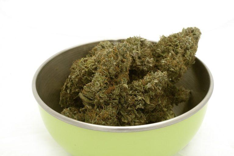 Marihuanablüten in einer Aufbewahrungsschale für Cannabis