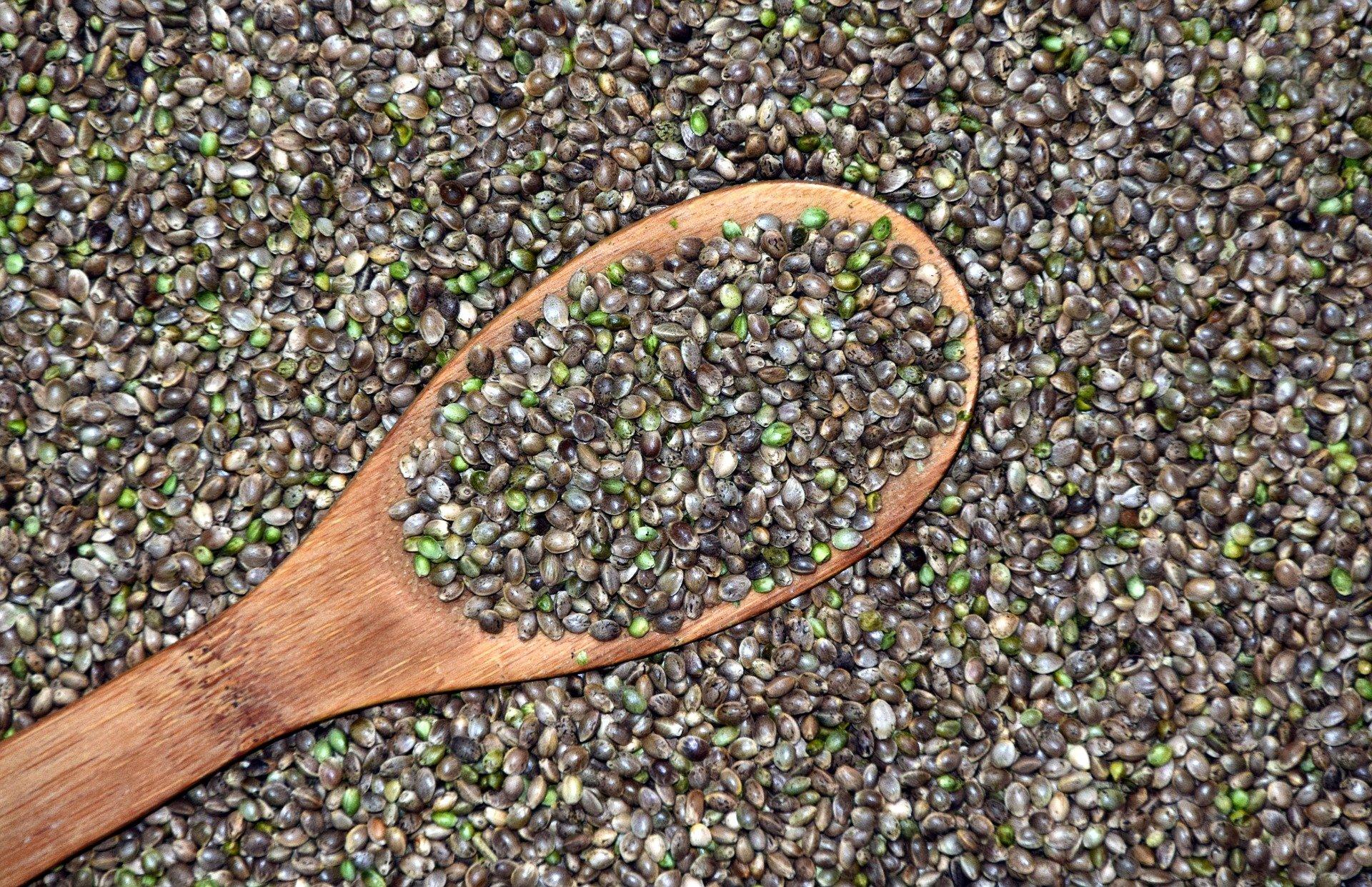 Hanfsamen als Basis für den Hanfanbau