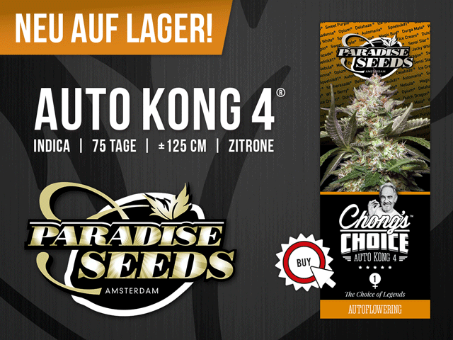 Banner von Paradise Seeds »Auto Kong 4«