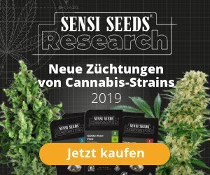 Sensi-Seeds-Banner »Research« neue Züchtungen von Cannabis-Strains 2019